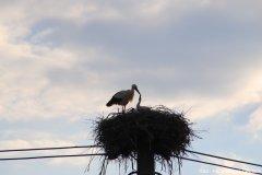 """Storch bei der Fütterung im Nest """"Auf dem Kalköfele"""""""