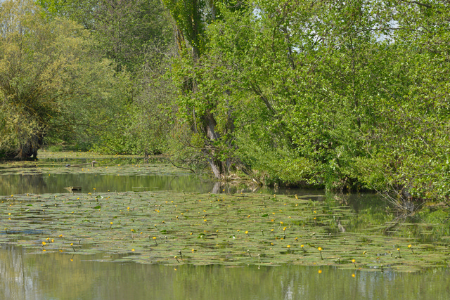 Flußarm mit See-Anemonen